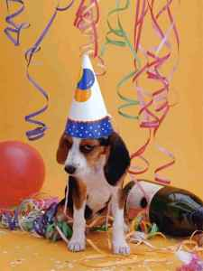 Party Dog!